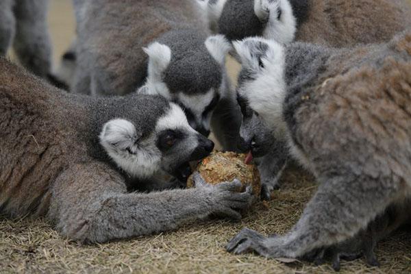 网络中国节·元宵|动物们的元宵节亮了:苜蓿草汤圆惊艳亮相
