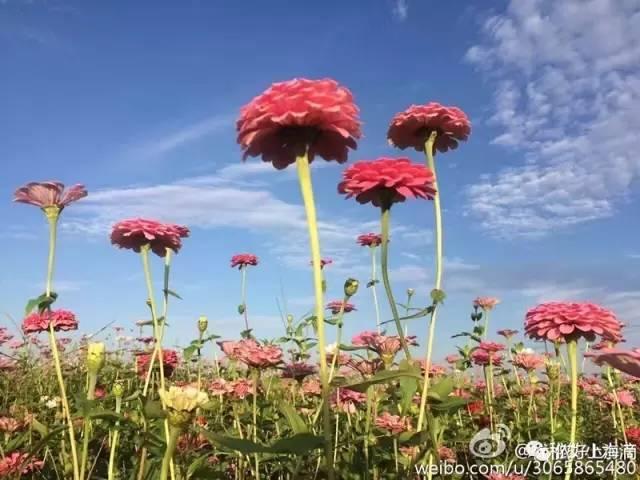 全上海最大花海!花开海上2月18日正式开园!