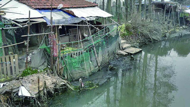 上海一农家乐成了农家臭!粪便竟直排河道