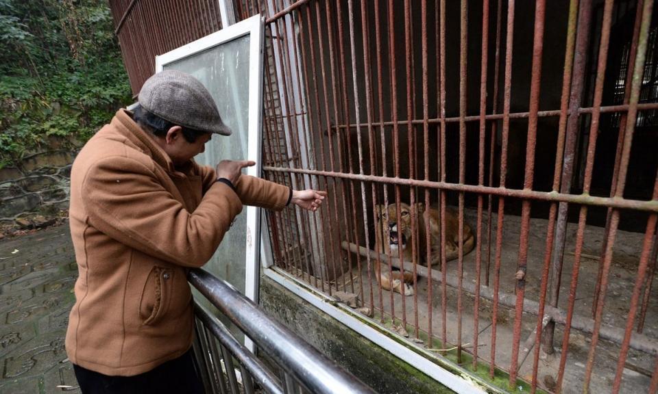 """重庆""""袖珍动物园"""" 生存环境恶劣动物生无可恋"""