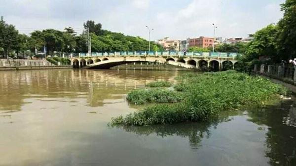 """奉贤南桥19名""""民间河长""""走马上任 深入参与水环境治理"""