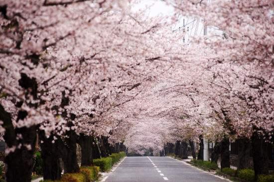 上海中心城区最大公园开建!徐汇中环将现3公里长樱花大道!