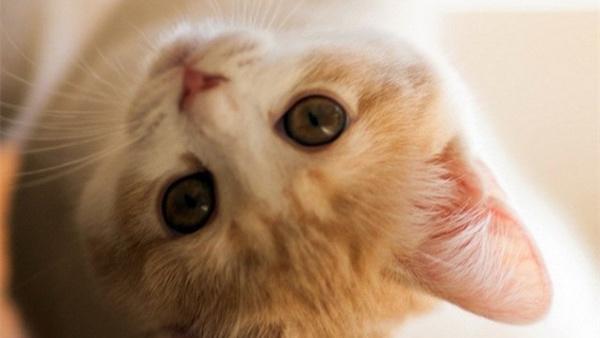 吴霜:两只猫的欢喜结局