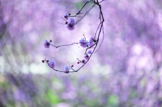 桃花瓣瓣沐春风
