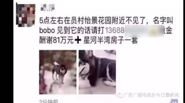 网传广州有人悬赏81万元和千万豪宅找狗