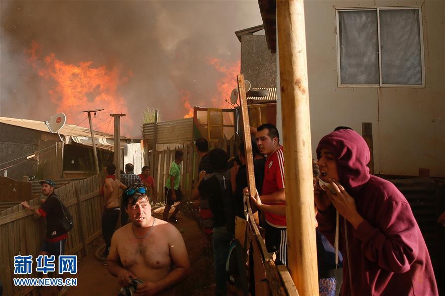 智利山火(组图)