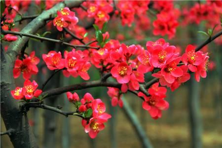 赏花的审美起源于童年