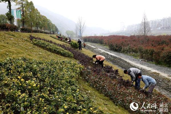 湖北竹山:堵河沿岸植绿忙