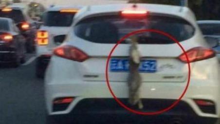 昆明一司机用活兔子遮挡号牌 交警:涉嫌违法