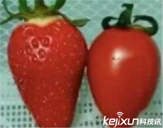 种草莓是什么意思图片_草莓网是