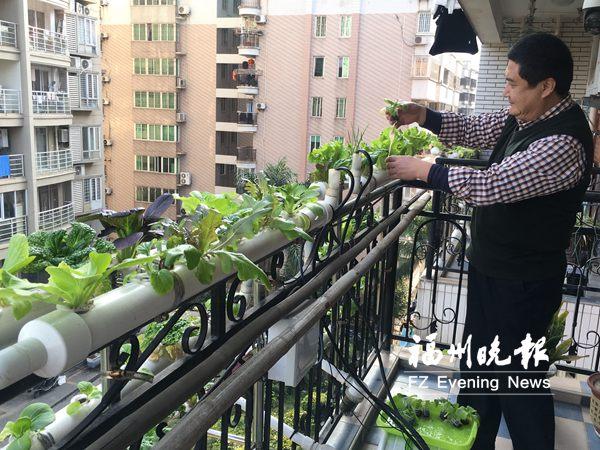 """阳台种菜成时尚 男子设计""""家庭水培蔬菜系统"""""""