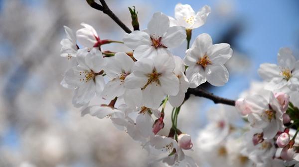 清明假期沪上公园活动丰富 适合出游赏花