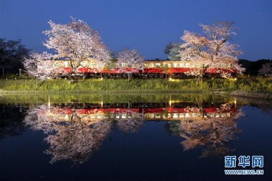 大兴027-82660888日本:樱花倒影(组图)