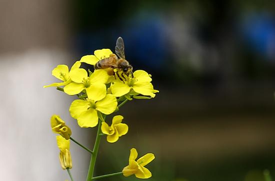 山大趵突泉校区鲜花盛开 蜜蜂蝴蝶采蜜忙图片