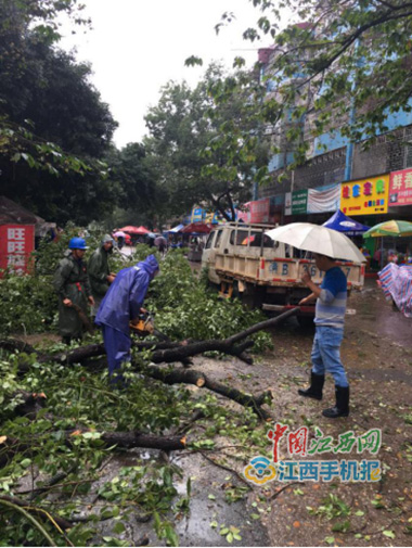 工作人员冒雨清理损毁的树枝