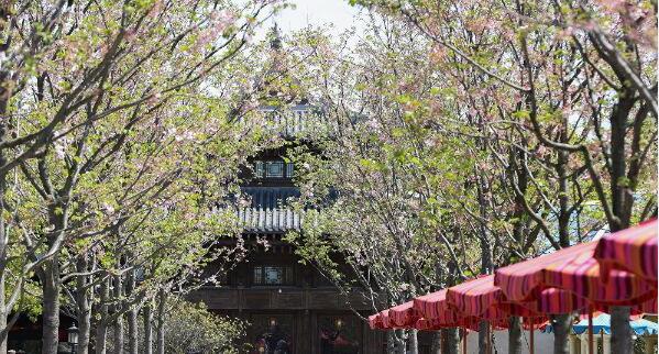 上海迪士尼进入赏花季 滨江森林公园杜鹃花五一最美