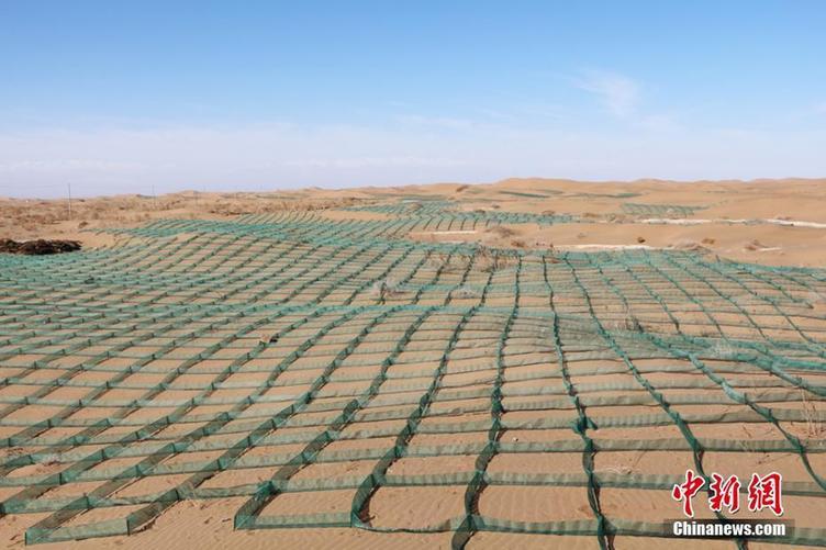 临川区欧艺加盟甘肃高台引进塑料尼龙网格固沙筑沙障