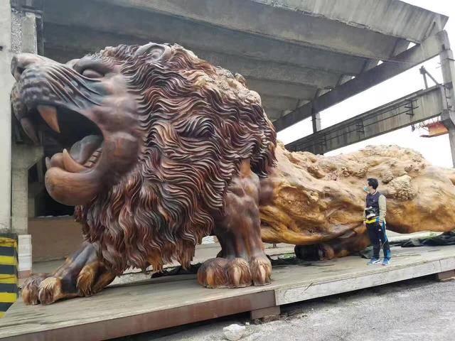 """霸气!土豪花600万养了只""""狮子王"""" 等于买了部劳斯莱斯"""