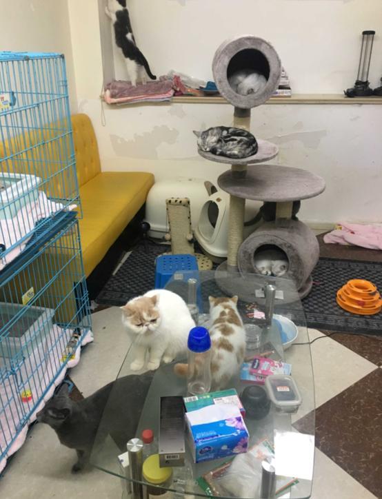《生活改造家》:看家装大师打造人猫共处安全空间