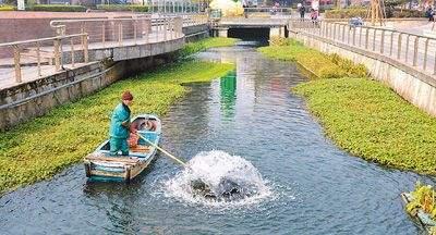 上海整治重污染河道:56条黑臭水体年内将基本消除