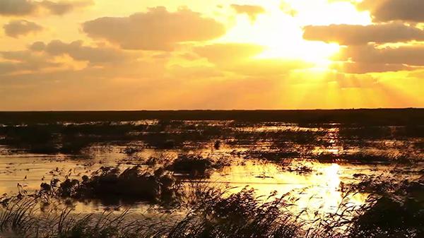 短视频:崇明生态岛