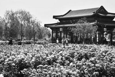 北京13处景点邀游客赏最美月季