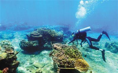 """海底""""放牧""""珊瑚"""