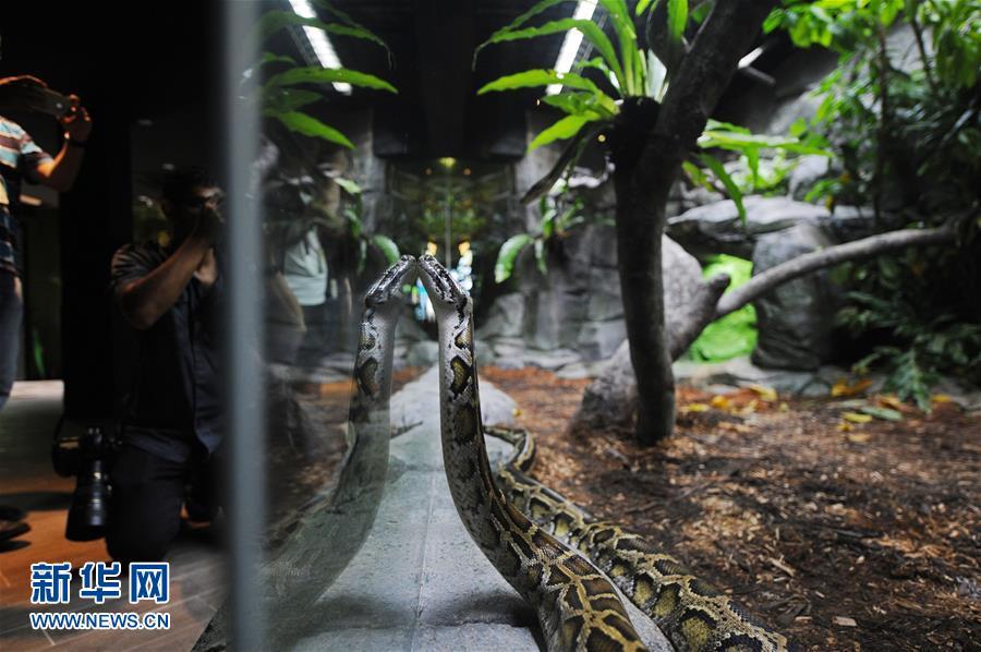 新加坡动物园将重新开放爬行动物展区