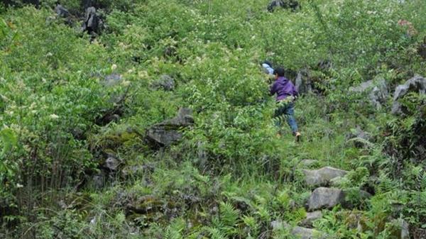 手记 | 在丛林和悬崖中穿行,随留守儿童走一次放学路