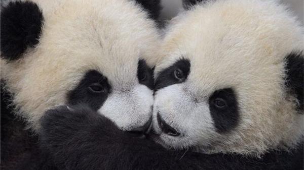 上海野生动物园开启小动物欢乐节 众多龙凤胎宝宝集体亮相
