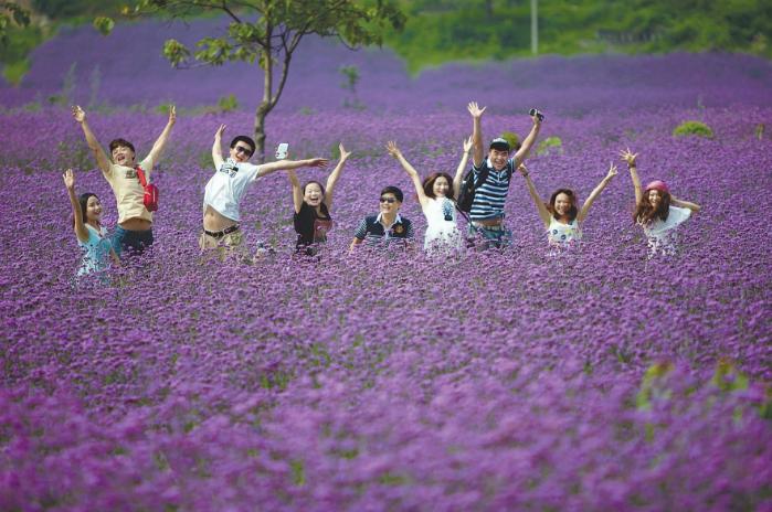 如诗如画!魔都市中心大片紫色花田浪漫盛放!