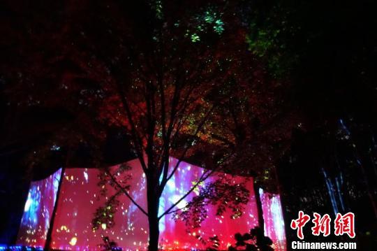 武汉东湖萤火虫活动遭质疑 主办方称皆为本地种群