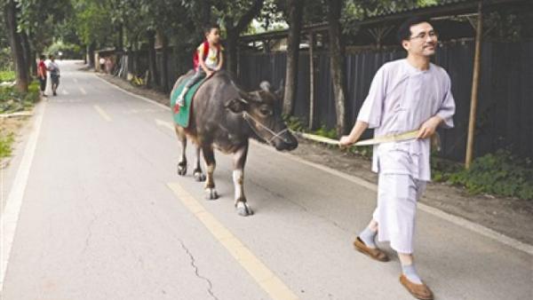 父亲醉心国学让儿子骑牛上学 交管部门:未禁止但存隐患