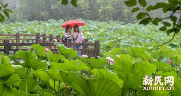 上海今天中午前后转阴有时有阵雨 局部地区雨量可达大雨