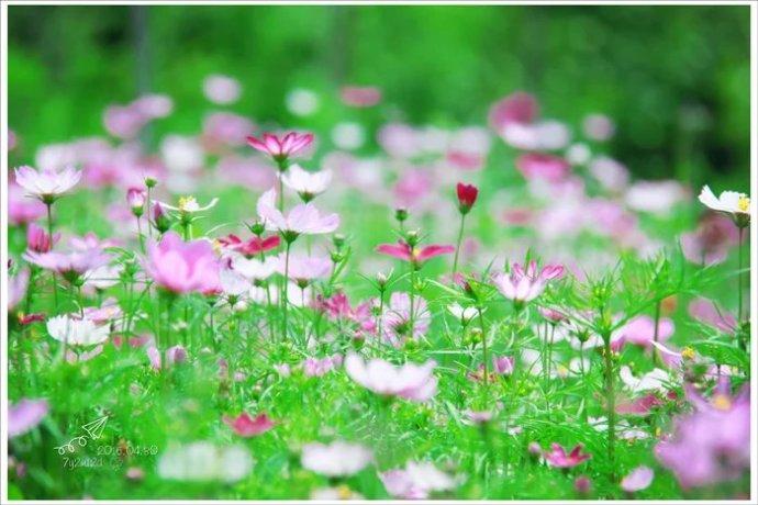 陌上花开可缓缓归矣