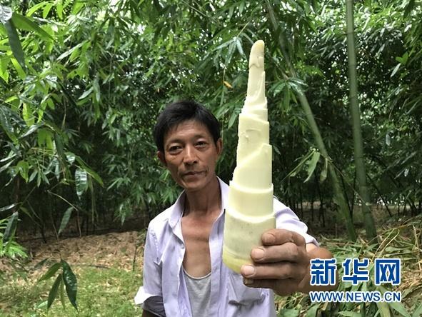 【共舞长江经济带】涪陵榨菜+三峡笋 农村经济带动当地农户走出致富路