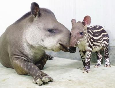 最近,上海动物园有很多呆萌可爱的动物宝宝出生了,还有不少新
