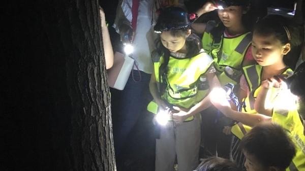 加档、开社区版仍供不应求 上海各大公园夜游缘何如此火爆?