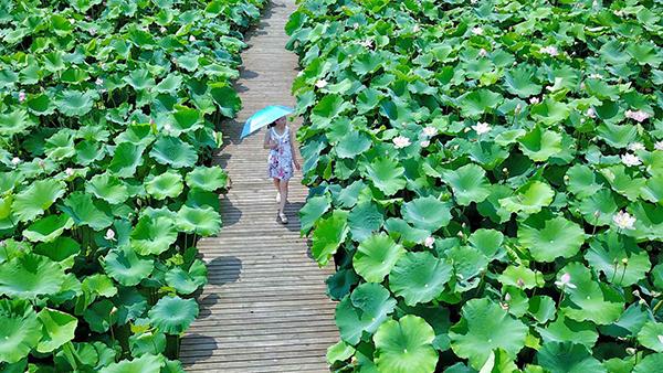 阅读上海100胜 19 | 四季花雨 崇明花海盛 瀛洲绿意满