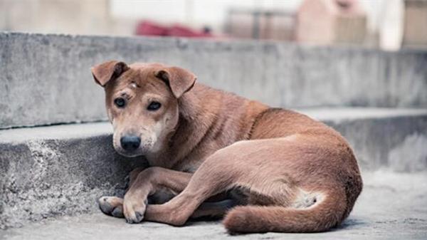 上海一38岁男子被宠物犬咬伤后病发身亡 闵行启动应急预案
