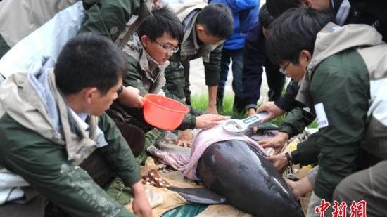 上海科学家在长江口发现江豚新种群