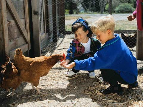 芬兰科研成果:用电和二氧化碳合成蛋白质  人类将来还喂鸡吗?