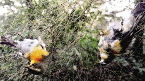 高温天林中布网捕鸟 嘉定一男子非法狩猎被批捕