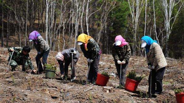塞罕坝:生态文明建设范例(砥砺奋进的五年·绿色发展 绿色生活)