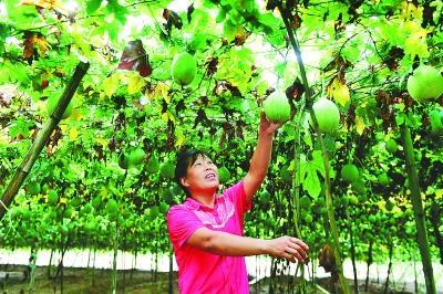 肥西县:特色产业助农脱贫增收
