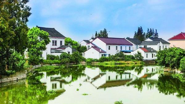 阅读上海100胜 52 | 练塘蛙鸣 稻花香里说丰年 鱼米之乡村村美