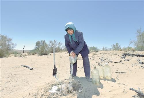 [中国梦实践者]内蒙古额济纳旗退休干部图布巴图植树防沙15年