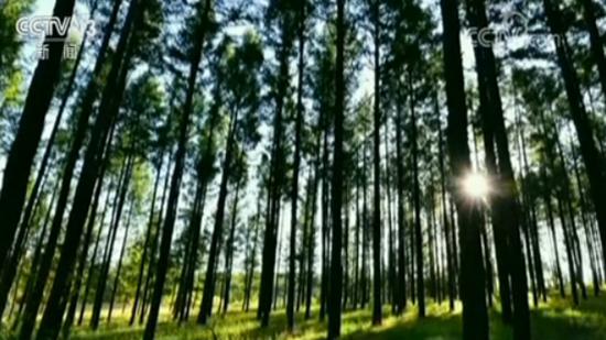 习近平总书记对塞罕坝林场建设者感人事迹的重要指示引发反响