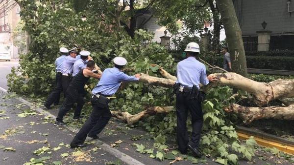 沪杨浦区隆昌路一卡车撞断行道树枝干 民警:已清理枝干恢复交通
