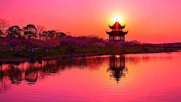 阅读上海100胜 70 | 海湾听松 七彩林间过 水墨画中游